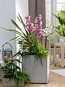 Cymbidium (Kahnorchis), Phalaenopsis (Malayenblumen), Anthurium