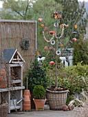 Vogelfutter an Prunus (Kirschbaum) im Korbübertopf