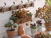 Sukkulenten auf der Terrasse