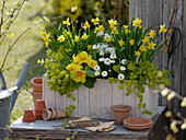 Holzkasten mit gelben und weißen Blumen bepflanzen 4/4