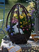 Österlicher Korb aus Birkenreisig bepflanzt mit Narcissus 'Tete a Tete'