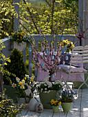 Osterbalkon mit Prunus triloba (Mandelbäumchen) geschmückt mit Ostereiern