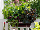 Blattschmuck - Kasten mit Euphorbia 'Antigone' (Wolfsmilch), Heuchera
