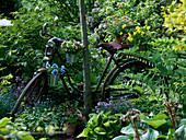 Altes Fahrrad an Baum gelehnt als Dekoration mit Viola