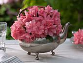 Rhododendron simsii (Zimmerazalee), Blüten geschnitten als Strauß
