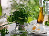Kräuter für Frankfurter grüne Sosse