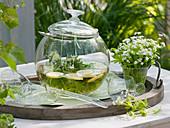 Waldmeisterbowle mit nicht blühenden Sträußen von Galium odoratum