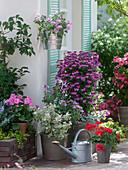 Geranien - Terrasse mit Pelargonium Angeleyes 'Burgundy' (Engelsgeranie)