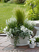 Petunia (Petunien), Helichrysum petiolare 'Silver' (Strukturpflanze),