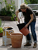Birne in Terrakotta - Kübel pflanzen 4/8