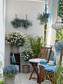 Blau-weißer Balkon mit Argyranthemum 'Stella 2000' (Margeriten), Lobelia
