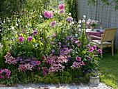 Rosa-pinkes Sommerbeet : Dahlia (Dahlien), Lavatera (Busch-Malve), Lilium