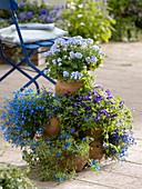 Topfturm bepflanzt mit Ageratum 'Alto Delft' (Leberbalsam), Lobelia 'Bavaria'