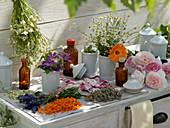 Stillleben aus Heilpflanzen und Teekräutern