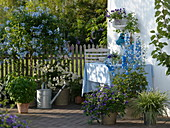Blau-weiße Terrasse mit Kübelpflanzen