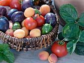 Erntekorb mit Tomaten (Lycopersicon), Paprika (Capsicum), Aprikosen