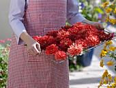Frau mit orangen Dahlienblüten zum trocknen auf Gitterrost