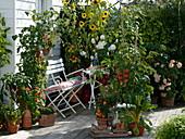 Naschterrasse mit Tomaten und Paprika
