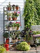 Pflegeleichte Terrasse mit Sukkulenten, Kakteen und Geranien