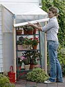 Mobiler Regenschutz für Sukkulenten, Kakteen und Geranien