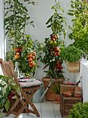 Tomaten in Kübeln auf dem Balkon