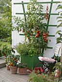 Grüner Holzkasten mit Tomaten, Chili und Basilikum an weißer Holzwand