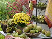 Erntetisch mit Birnen und Herbstchrysantheme im Topf