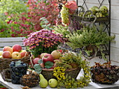Harvest table with fruits, silver chrysanthemum and herbs