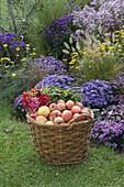 Großer Weidenkorb mit Äpfeln und Blumen