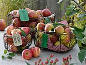 Drahtkörbe mit Äpfeln 'Jonagold', 'Boskoop' und 'Cox Orange