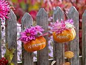 Kleine Kürbisse mit Botschaft hängend an Zaun