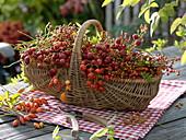 Weidenkorb gefüllt mit geschittenen Früchten von Rosa (Hagebutten)