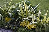 Gelb-grünes Beet mit Neuseelandflachs