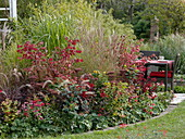 Rotes Herbstbeet mit Stauden , Gräsern und Sommerblumen