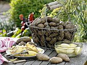 Freshly harvested early potatoes 'Sieglinde' in harvest basket and peeled in water