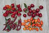 Chili - Tableau : Glockenchili 'Bishop's Crown', Baumchili 'Rojo'