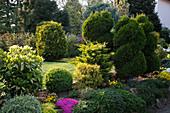 Immergrüne Sträucher in Garten, zum Teil rund geschnitten