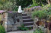 Staffler : Steinmauer und Treppe mit Katze