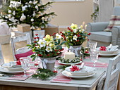 Weihnachtliche Tischdeko mit Helleborus niger (Christrosen), Ilex verticillata