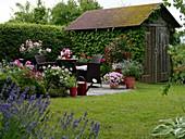 Kleine runde Terrasse mit Sitzgruppe und Kübelpflanzen