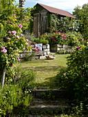 Garten mit historischen Duftrosen, Trockenmauer und Gerätehaus
