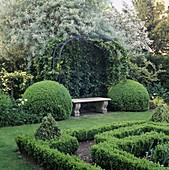 STONE BENCH, HEDERA 'PARSLEY CRESTED' On Metal FRAME Behind Box BALLS at Side,IN THE KNOT Garden at BOURTON HOUSE,GLOS.