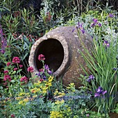 Old Olive Pot SURROUNDED by RUTA, CENTRANTHUS RUBER, Iris & Oleander CARTIER / HARPERS & Queen Garden, CHELSEA 95. DES: M. Walker