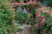 Pergola OVER PATH with ROSE 'MINNEHAHA' & 'ALOHA',CAMPANULA LACTIFLORA,CLEMATIS 'Royal VELOURS'. SLEIGHTHOLME DALE Lodge, NORTH Yorkshire