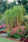 PHORMIUM, SEDUM 'AUTUMN JOY', MISCANTHUS SP, Aster 'Pink ZENITH', HEUCHERA 'PALACE Purple'.THE Old VICARAGE, Norfolk