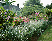 ROSES 'Ispahan' AND 'CONSTANCE SPRY' AND LYCHNIS CORONARIA OCULATA. ASHTREE Cottage, WILTSHIRE. Designer: W LAUDERDALE