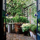 SMALL Town Garden: VIEW THROUGH BACK DOOR / French WINDOWS INTO SECLUDED BRICK COURTYARD AREA. TRELLIS On WALL AND A Collection of CONTAINERS. Designer: Anthony Noel