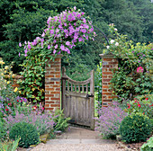 CLEMATIS'Perle D'AZURE' CLIMBS OVER ARCHED GATEWAY LEADING TO LAWN, SMALL CLIPPED Box EITHER Side of PATH. VALE END, Surrey