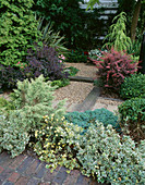 Town Garden with PATH of RAILWAY SLEEPERS & GRAVEL SURROUNDED by Evergreen SHRUBS. Designer: JILL BILLINGTON