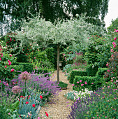 VIEW Along GRAVEL PATH TO PYRUS SALICIFOLIA 'PENDULA', with Dianthus'ROSE DU Mai',ALLIUM CHRISTOPHII.THE ANCHORAGE,Kent